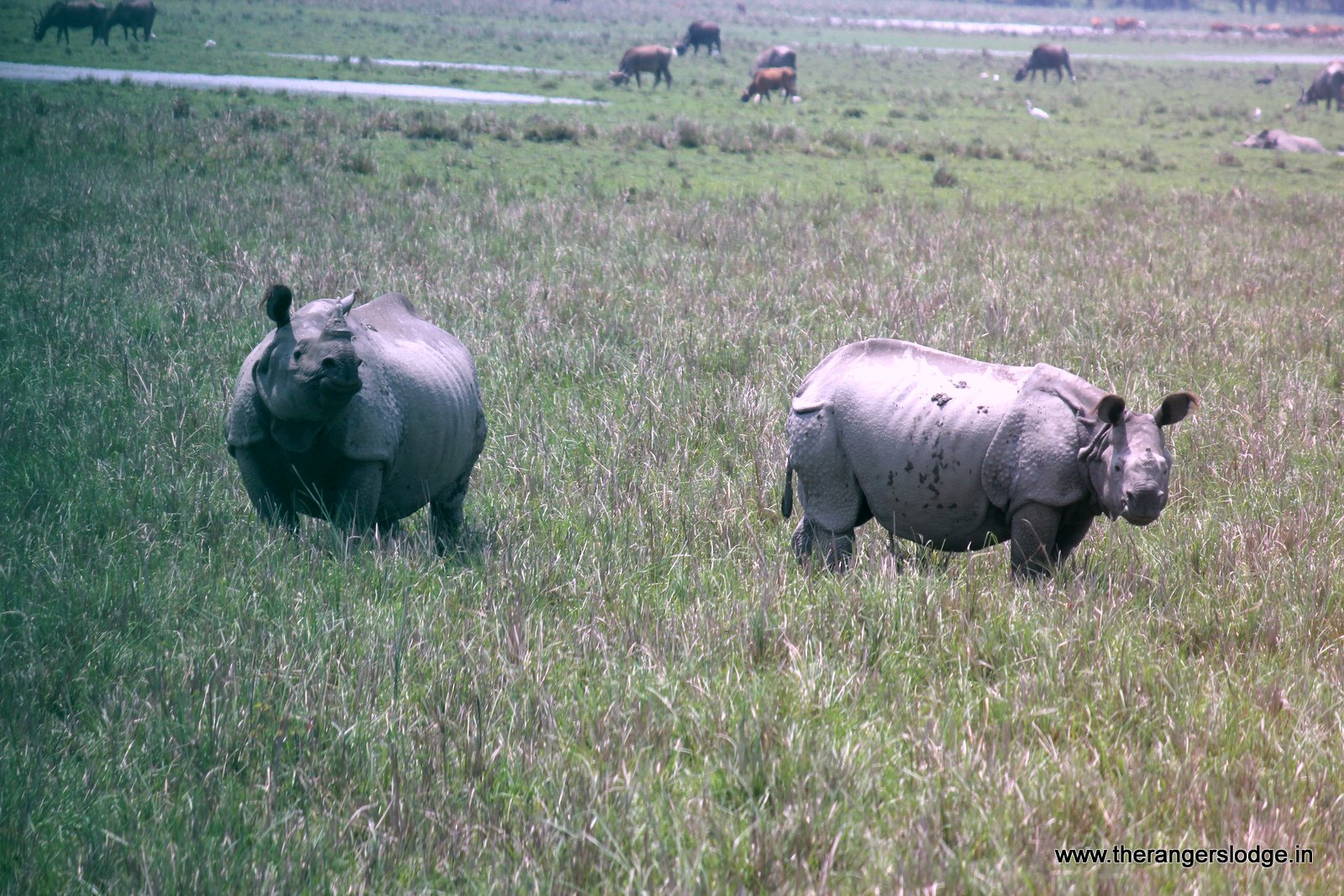 the rangers lodge corbett rhinos